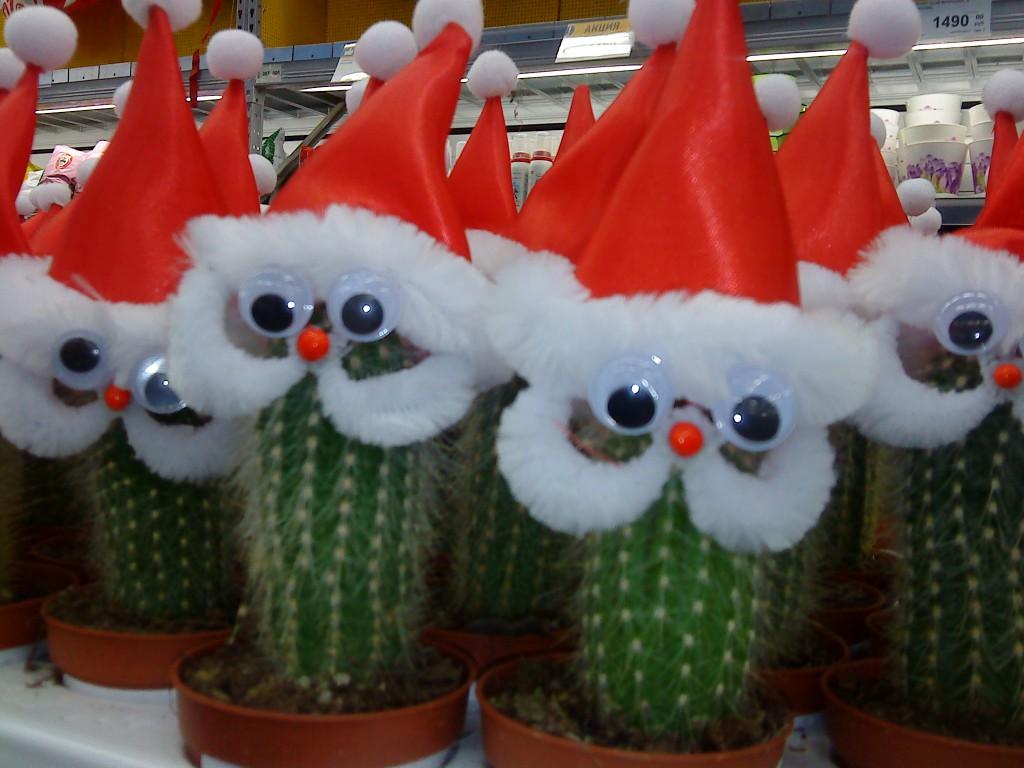 Дед мороз из кактусов